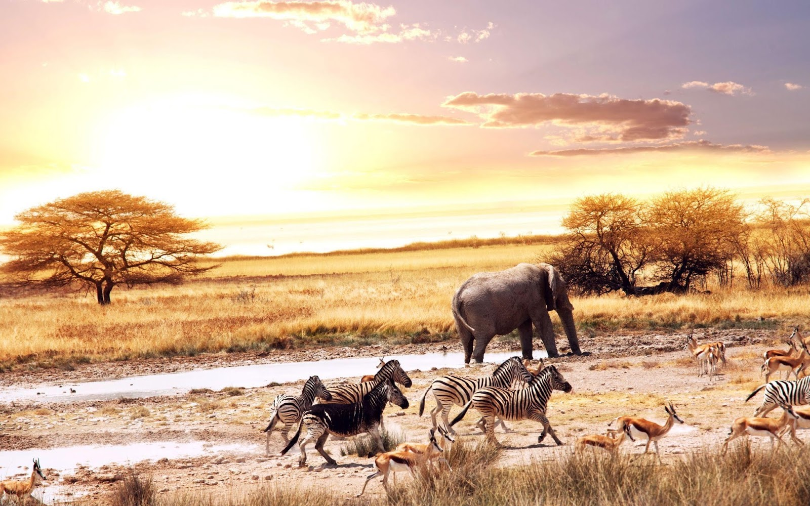 Wild Animals in Africa Wallpapers  Wallpapers
