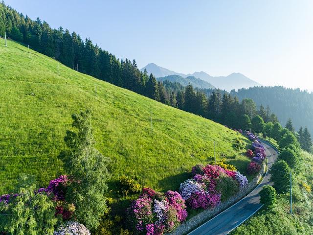 Panoramica Zegna rododendri foto drone