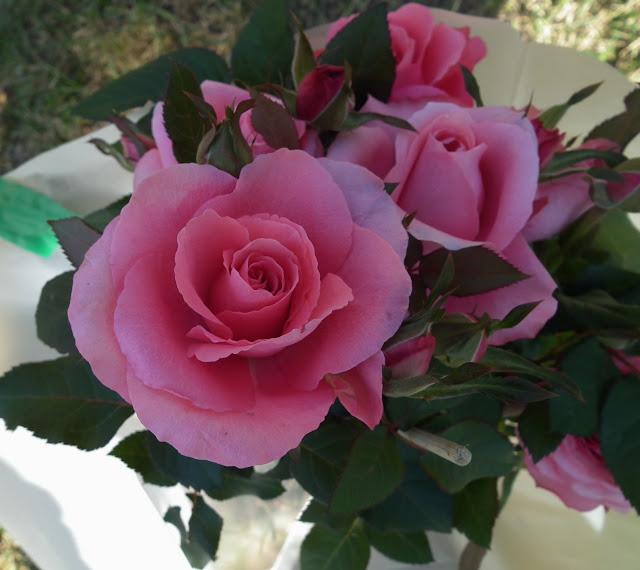 ruusu, pinkki, pinkki ruusu