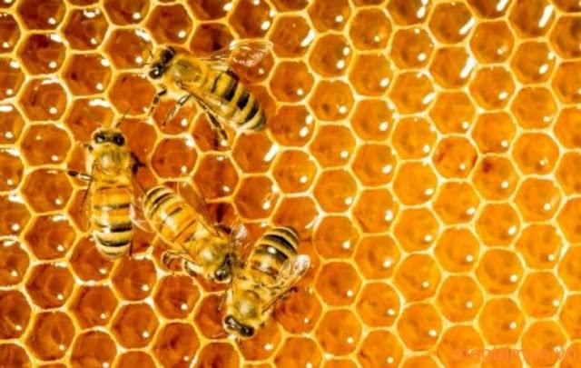 Cách trị mụn bằng sữa ong chúa