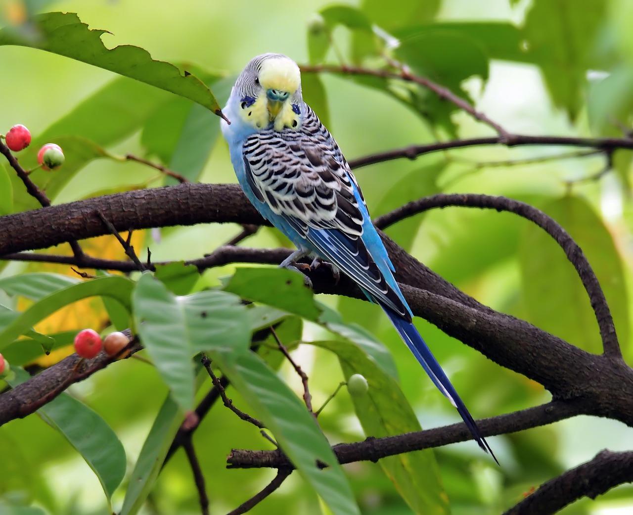 6 Tips Merawat Burung Parkit Anda