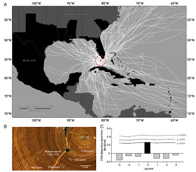Shipwrecks, tree rings reveal Caribbean hurricanes