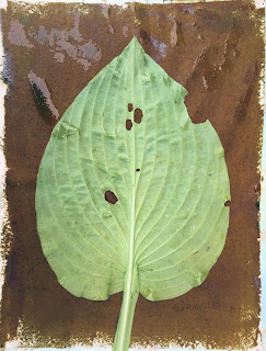 Solarfast prints_Sue Reno_Image 8