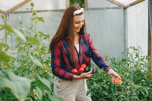 10-tips-untuk-memulai-pertanian-hobi