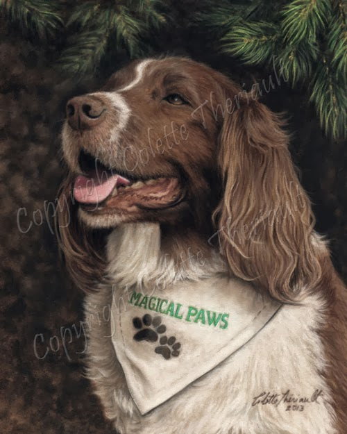 Therapy Dog Springer Spaniel Memorial Portrait painting in pastel