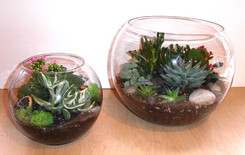 Plants Terrarium Landscapes Bonsai S Give The Office Clean Professional Looks That Your Table Tops Deserve Like Anthurium Phalaenopsis
