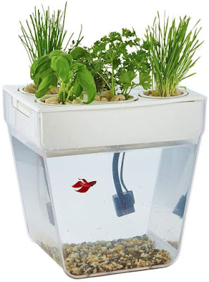 Aquarium Aquafam