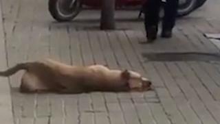Ισπανία: Η αστυνομία συνέλαβε άστεγο, αφού πρώτα σκότωσε τον σκύλο του