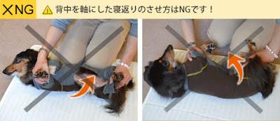 cães em tratamento