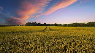Farm dream meaning, farm in dream meaning, farm dream interpretation, seeing farm in dream meaning, farm dream meaning auntyflo