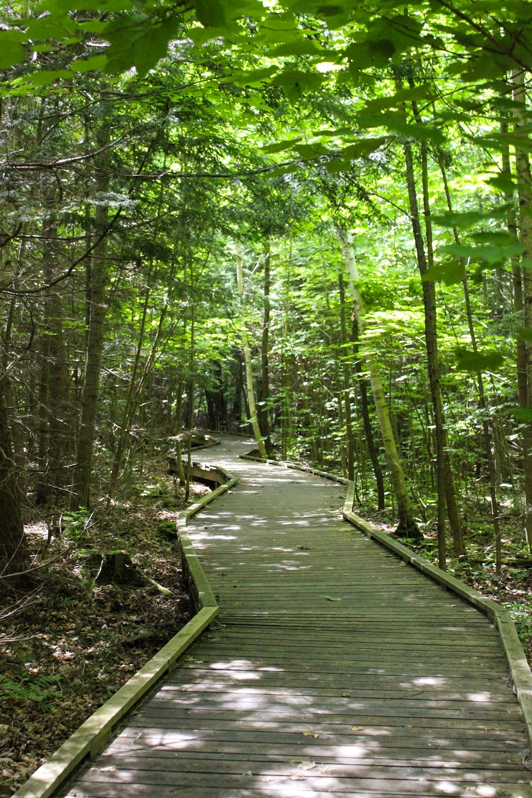 beaver pond trail at Awenda Provincial Park