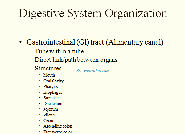 human digestion system,sharma sir ,biology, the digestive system ,scceducation.com ,biology, sharma sir ,mouth,salivary ,enzyme,