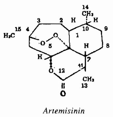 Thanh Cao Hoa Vàng - Artemisia annua - Nguyên liệu làm thuốc Chữa Cảm Sốt
