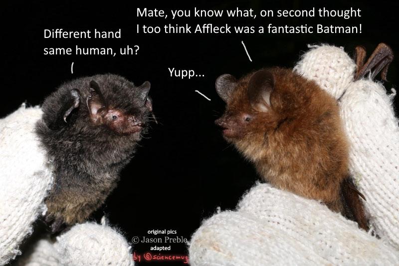 Two bats chatting about Batman