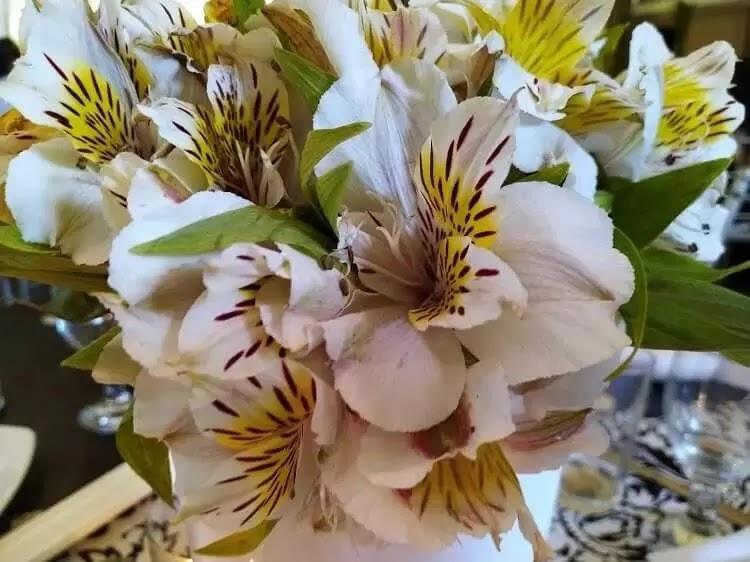 Huawei Y Max Main Camera Sample - Flowers, Macro