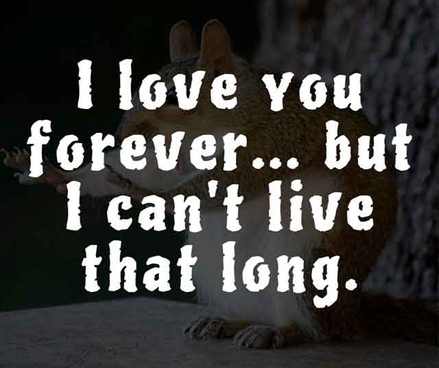funny sayings and quotes about life and love funny quotes and sayings about relationships