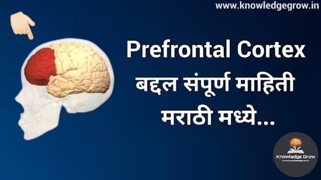 Prefrontal Cortex म्हणजे काय ?   संपूर्ण माहिती मराठी मध्ये...