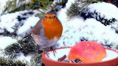 Cómo ayudar a la fauna silvestre del jardín a sobrevivir el invierno