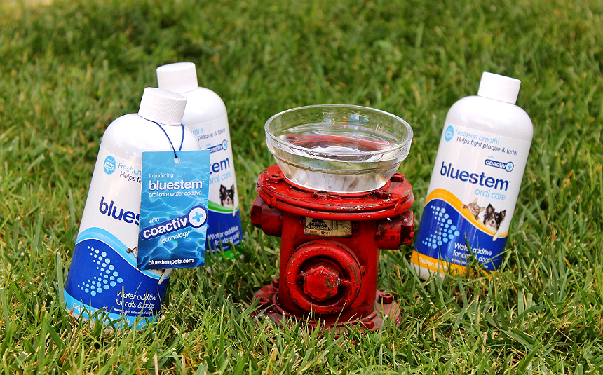 bluestem™ with coactiv+™ water additives and breath sprays can help fight tartar build up and bad breath in your dog. It's a fuss free way to help support healthy oral hygience! #bluestempets #ad