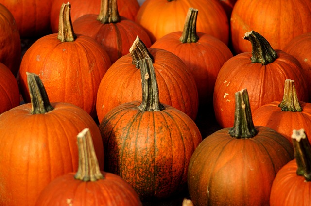 Fur Everywhere Benefits Of Pumpkin For Cats