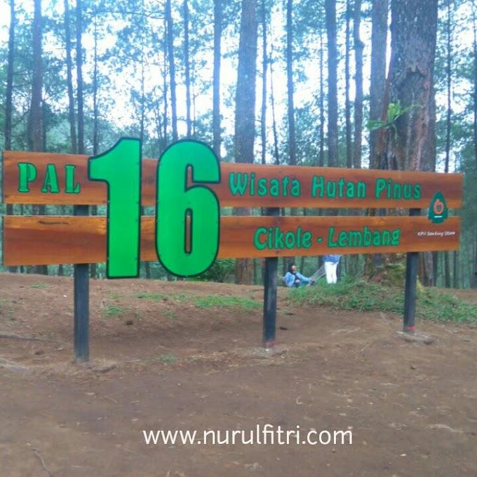 Wisata Hutan Pinus Cikole- Lembang