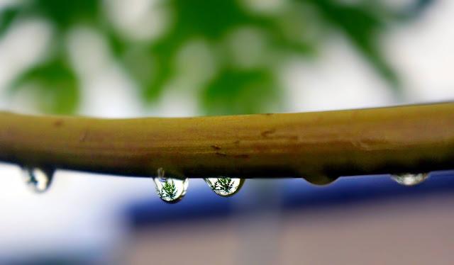 Foto Macro Embun Yang Indah di Dedaunan