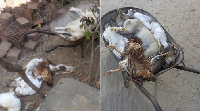 Moradores denunciam matança de animais em sítio de Campina Grande