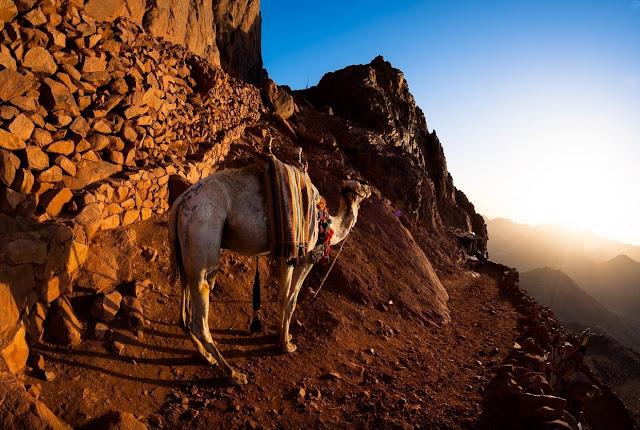 Sharm Safari Tours