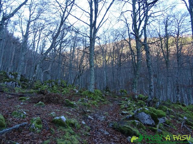 Ruta Gumial: Bosque otoñal