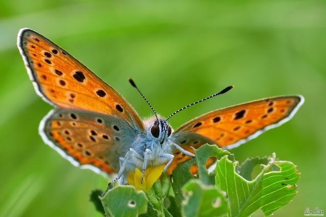 Butterfly Portrait