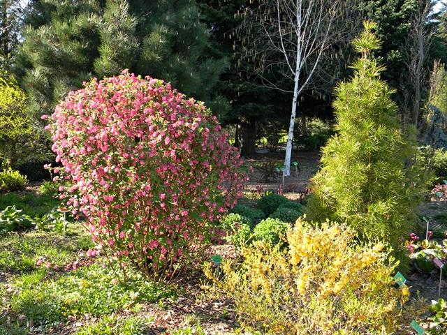 arboretum w Wojsławicach i rośliny