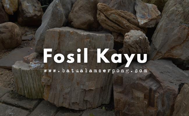 fosil kayu untuk taman