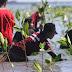Sentuhan Tangan Hamzah Adam untuk Pengembalian Ekosistem Mangrove