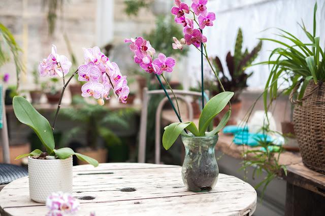 Engrais maison pour orchidées. Elles s'épanouiront de façon spectaculaire!