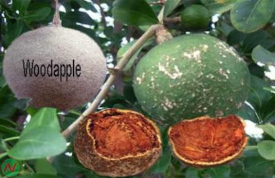 wood apple fruit; wood apple