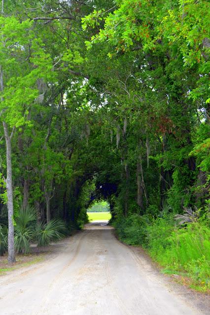 trees, road