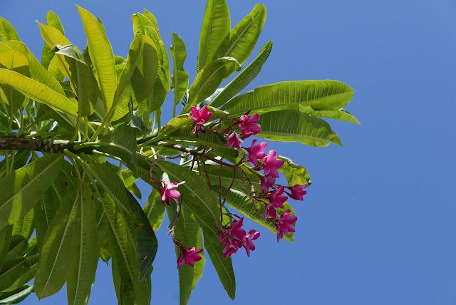 Florida Keys Flowers