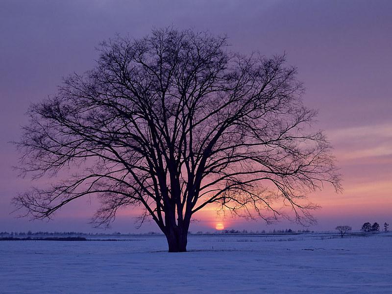 Free Wallpaper: Winter Sunrise Wallpaper