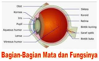 Mengenali Bagian-Bagian Mata Dan Fungsinya