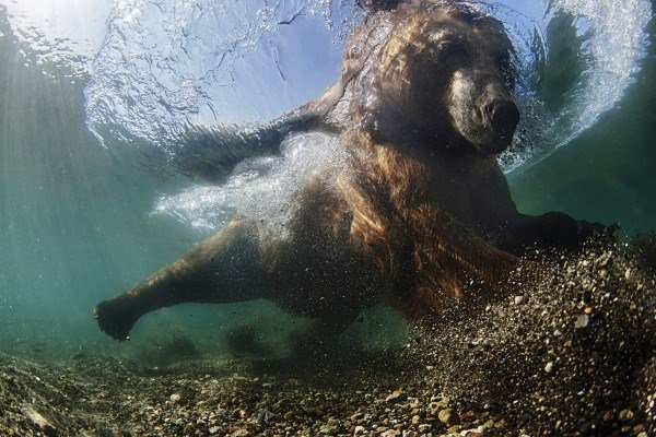The Best Underwater Photos EVER Taken Show Life From A Different Angle. - Wide Angle 'Underwater fisherman' by Mike Korostelev from Russia