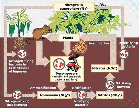 Biological Nitrogen Fixation