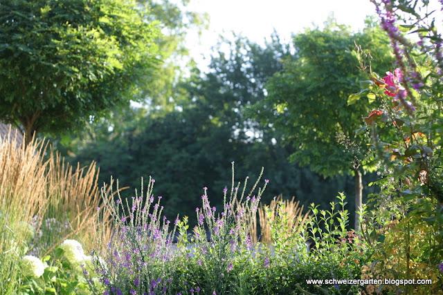 Die Schönsten Gräser Für Den Garten gräser für steingarten winterhart die schönsten einrichtungsideen