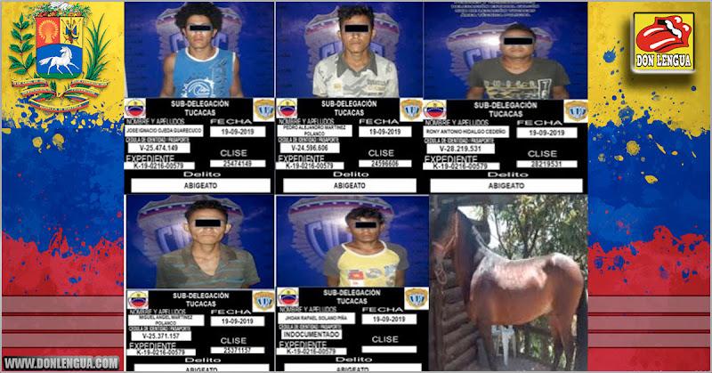 Detenidos cinco peligrosos delincuentes por robarse UNA MULA en Tucacas