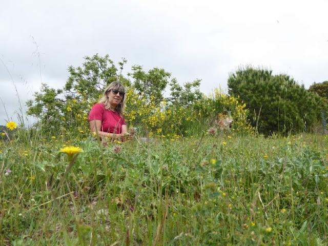 campo fiorito Pecorile