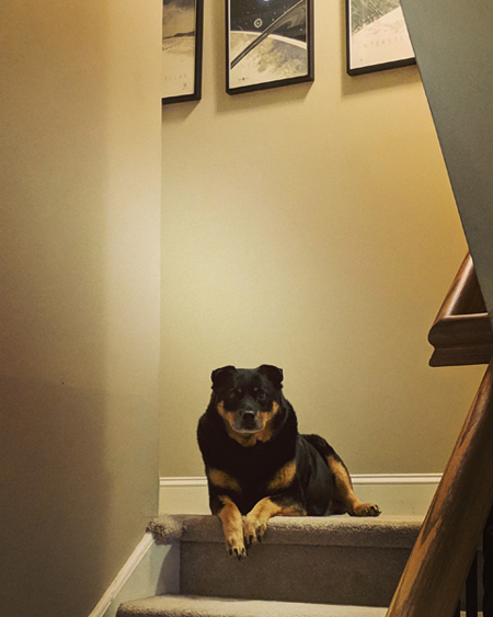 image of Zelda the Black and Tan Mutt sitting at the top of the stairs