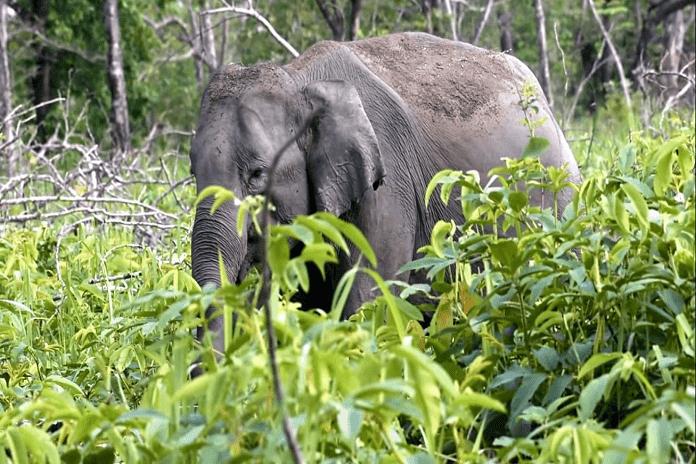 Nameri-National-Park-Best-Tourist-Destinations-in-Assam