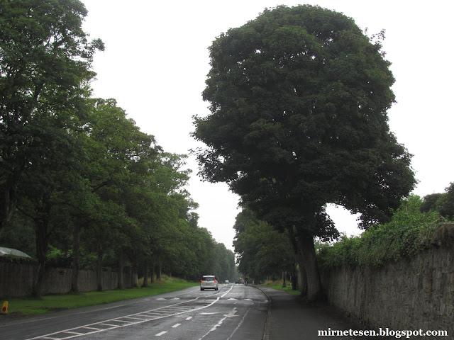 Дублин - идеальное сочетание серого и изумрудно-зелёного