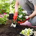 8 Kesalahan Yang Biasa Dilakukan Saat Berkebun