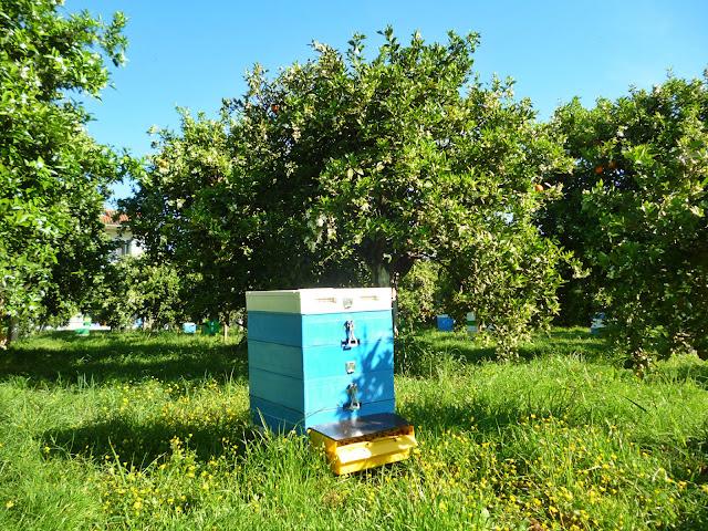 Οι βροχές μπλόκαραν τα μελίσσια της Πελοποννήσου στην ανθοφορία