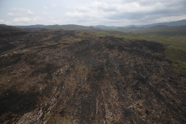 Área tomada pelo fogo na Chapada Diamantina, na Bahia (Foto: Paula Fróes/GOVBA)